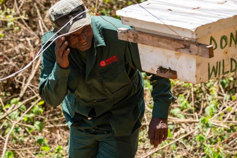 Hermant inspecting beehives